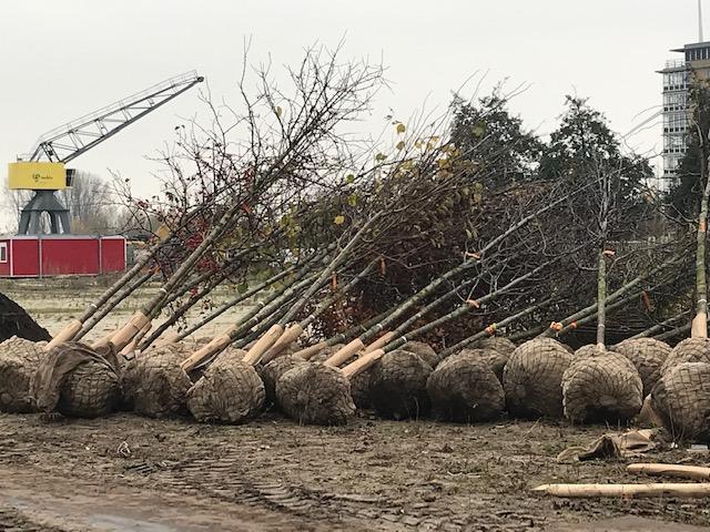 Bomen aanplamt IMG_2111
