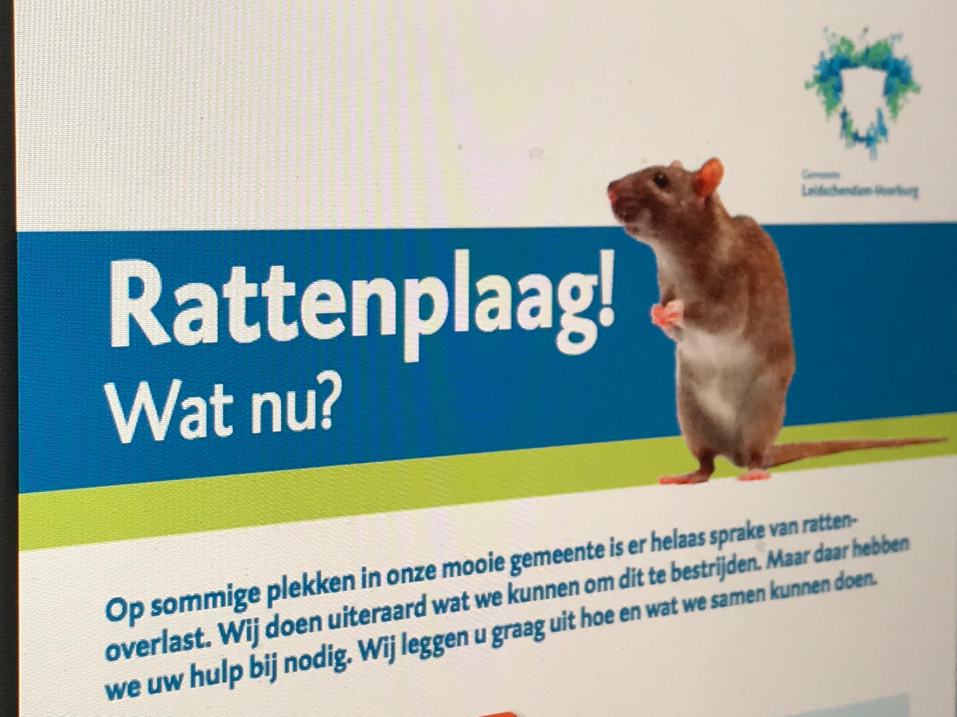 Ratten IMG_4776