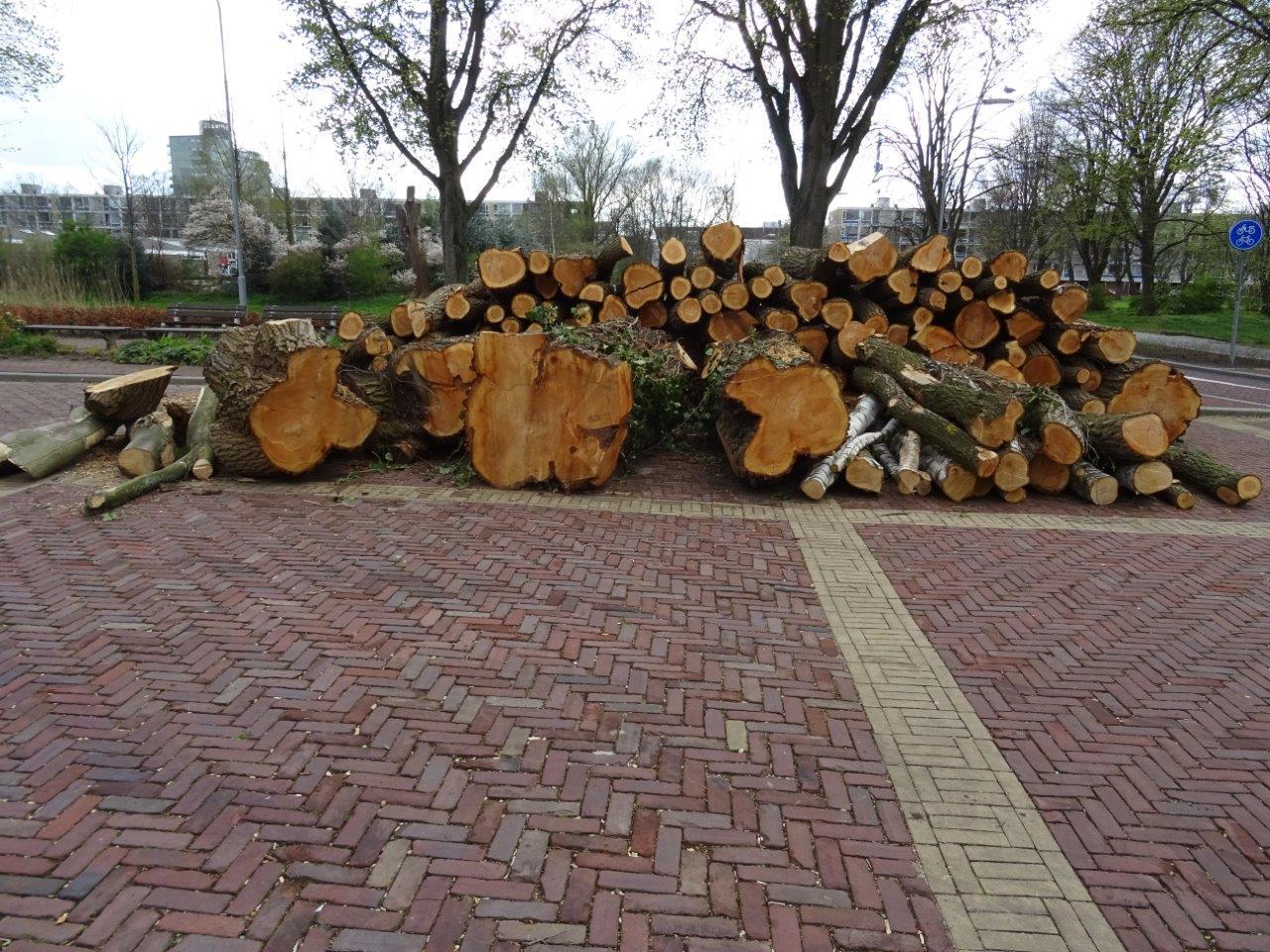 bomen DSC01347